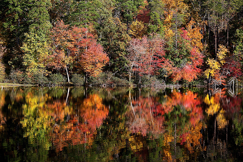 Fall color at Lake Cheaha at Cheaha State Park, Talladega County, Alabama    Photograph submitted by Greg McWilliams
