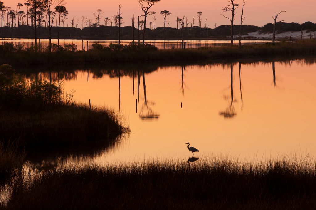 Heron at Bon Secour National Wildlife Refuge near Gulf Shores, Alabama   Photograph submitted by Drew Senter